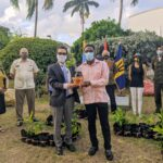 Venezuela  Embassy gifts Barbados 54 mango trees