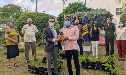 Venezuela  Embassy gifts Barbados 54 mango trees